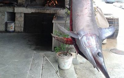 A swordfish