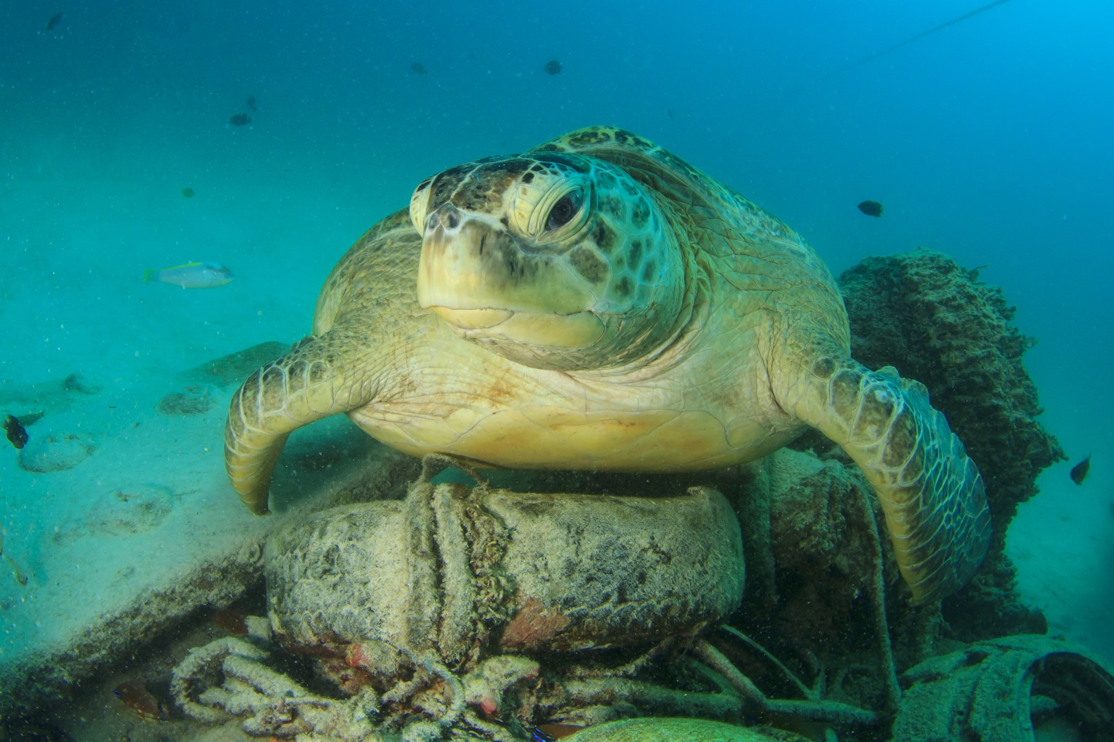 Turtle and Sea Pollution