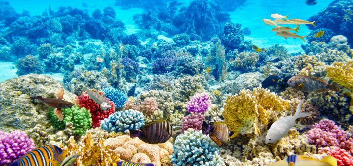 "coral reefs a diverse ecosystem essay It also stressed the importance of comprehensive ecosystem management that includes all stakeholders,  22 thoughts on "" losing our coral reefs "" fly shop says."